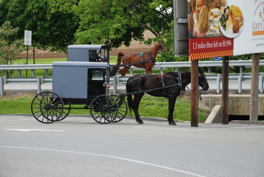 a comparison of the chasidim and old order amish As of 1998 there were seven large old order amish settlements in ontario, and none in the rest of canada although many amish groups have actually joined the mennonite church, the most conservative remain separate and are easy to identify they wear dark, plain clothing, travel by horse and buggy, and use little or no electricity.