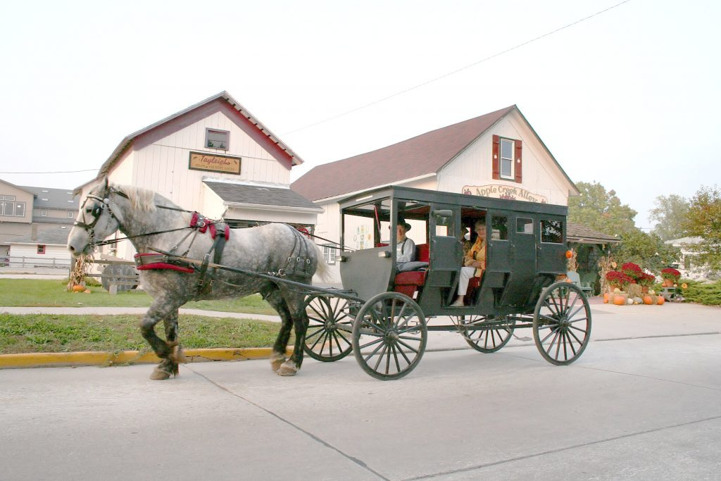 Amish tour buggy