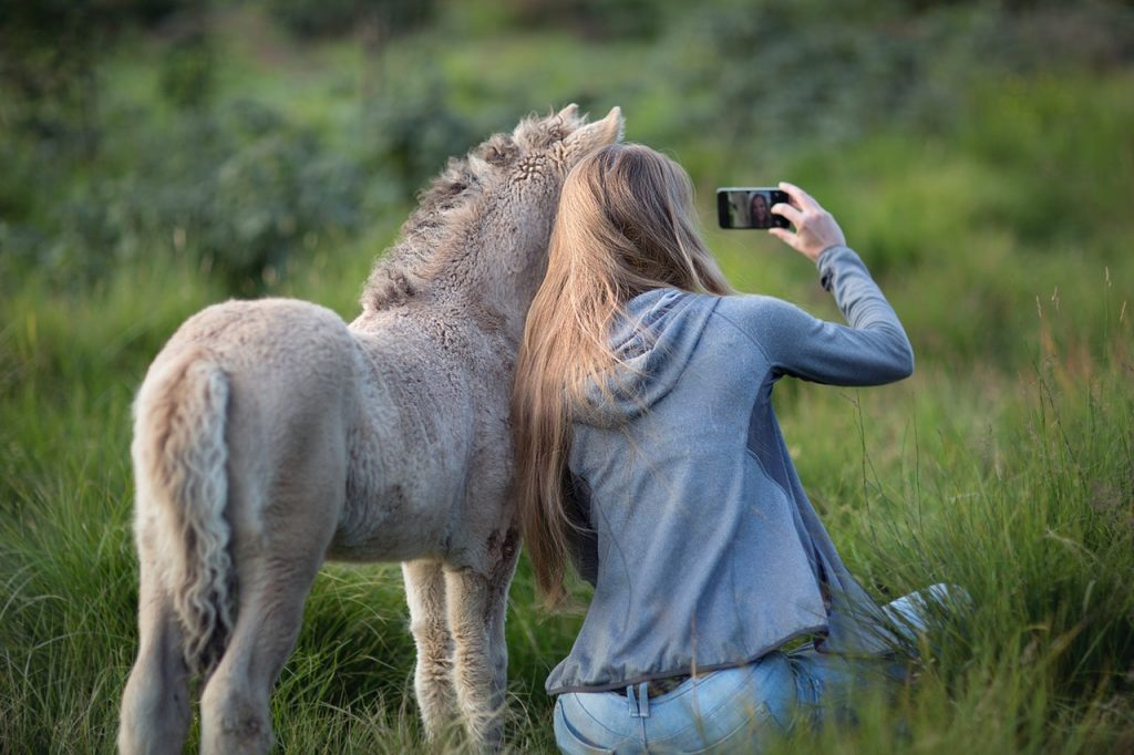 A woman taking a selfie with a miniature donkey, seen from behind